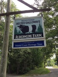 Aldermore Farms Belted Galloways