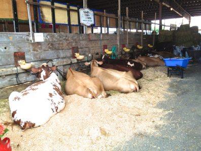 Small's Dairy Farm