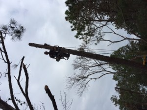 outer-banks-tree-removal-seasons-landscaping-1