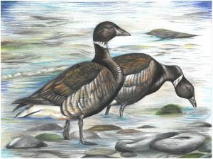 Brant by Shalina Vasagam | 2020 Washington State Best in Show