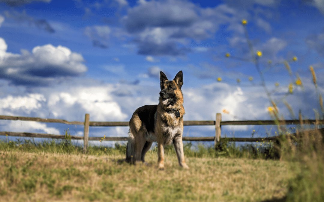 Birding with Dogs – It is Possible!