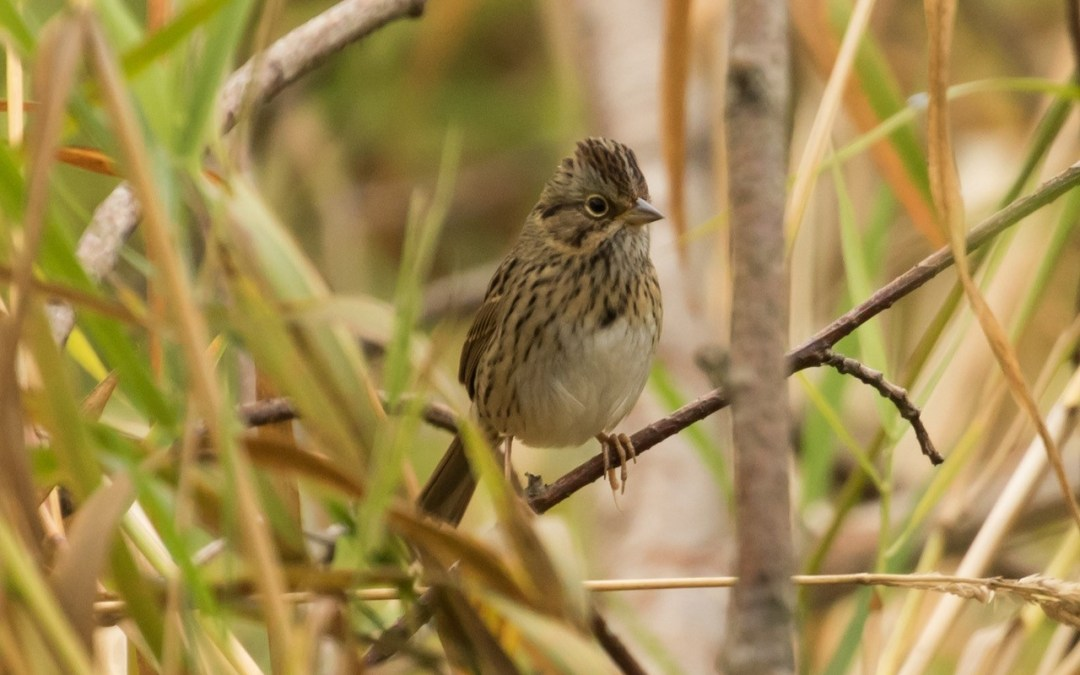 Names Are Power: Let's Talk About Decolonizing Bird Names