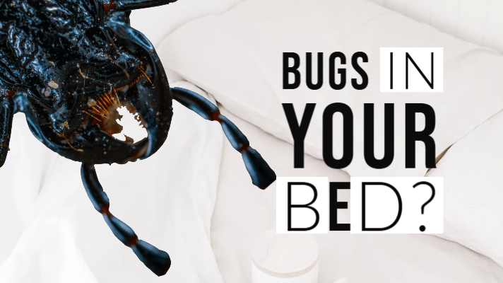 Bugs That Look Like Bed Bugs in your bed?
