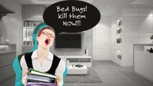 kill bed bugs now