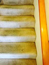 Olympia Carpet Cleaning - Power Pup Clean