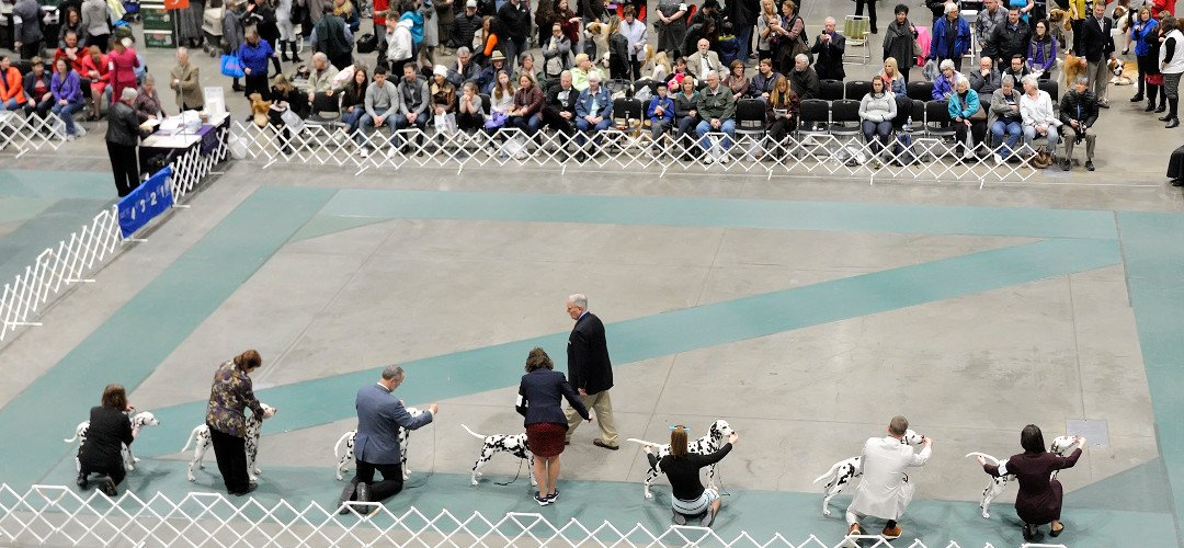 5499-SKC-Candids-2016.tif  Seattle Kennel Club | 2016 | Jerry and Lois Photography  © Jerry and Lois Photography All rights reserved  http://www.jerryandlois.com