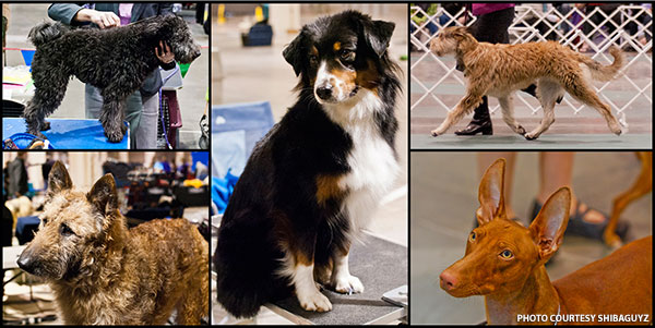 Dog Grooming Classes Seattle