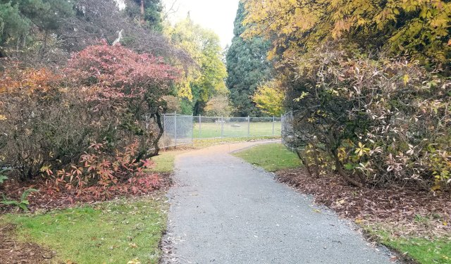 crushed rock path leading between two tall shrubs, with chain link fencing in background