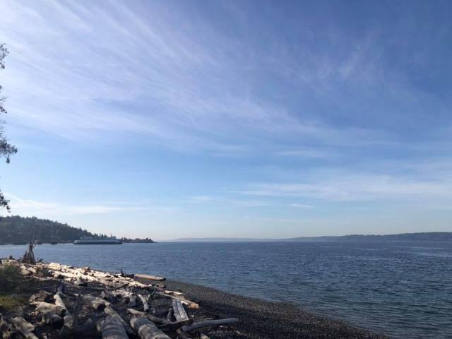 photo of water and blue sky with driftwood on shoreline in foreground, car ferry in far distance.