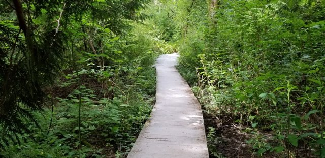 photo of long boardwalk through dense undergrowth