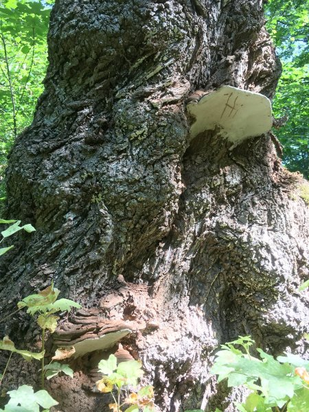 """detail of tree trunk with fungus growing out of it. The word """"hi"""" is visible on the underside of the fungus."""