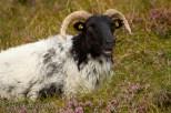 Achill Island - (C) Marta Stoklosa