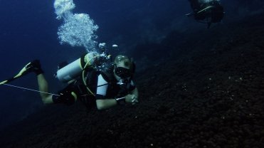 Clip 48: Coral field with Hannes Potgieter from Sea Breeze Marine. Dive site: Shark North