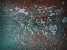Filefish on Barnacled Boat 1024 x 768