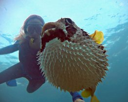 Renee Blundon with a Puffed-up Pufferfish 1280 x 102
