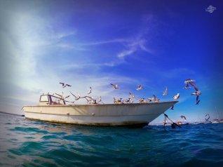 Birds in Msasani Bay 1024 x 768