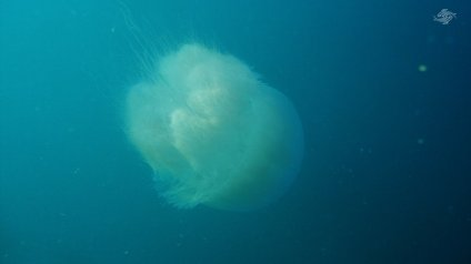 Back View of the Giant Jelly 1366 x 768