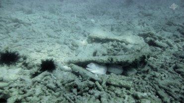 Moray Eel In Dynamited Reef in Kinondoni 1366 x 768