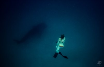 Renee Blundon free-diving with a whale shark
