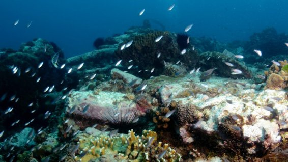 Various corals and reef fish