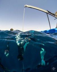 no-limits freediving sharm el sheikh