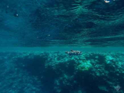 free-diving at blue hole dahab