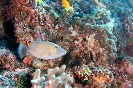 Scuba diving Dindini wall Mafia island Tanzania