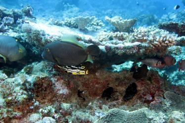 Mafia island Mikindini Reef scuba diving