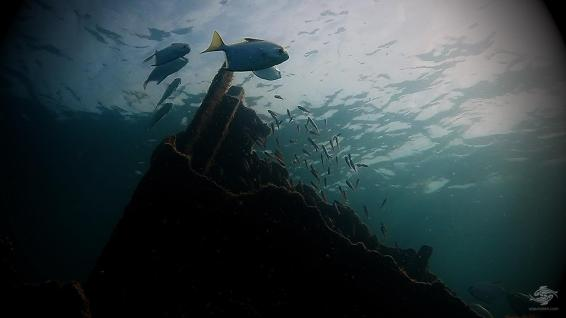 Looking up the wreck
