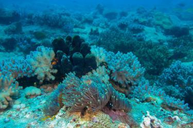 Kankadya patches Dar es Salaam Diving Tanzania