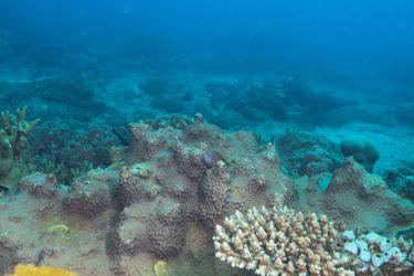 A hawkfish sits on coral at Bongoyo Patches
