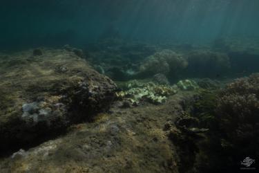 View of underwater city
