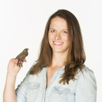 Heather Watts, Ph.D., holding a house finch, a relative of the pine siskin.