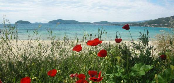 Blooming poppies, Glastres beach, Palio Kavalas, Greece