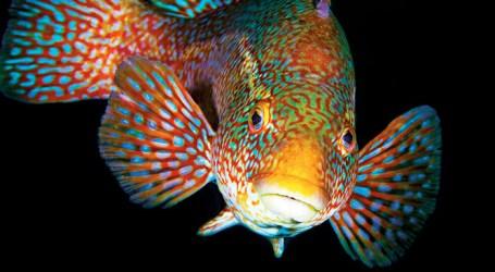 Landmark book on cleaner fish