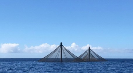 A new frontier for deep-sea fish farming