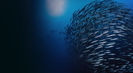 Unleashing the potential of sustainable aquaculture