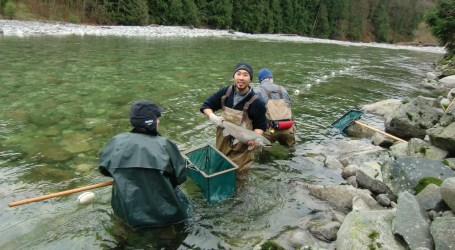 Fish farms do not need to test for B.C. strain of virus