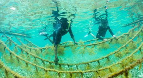Sea the future with restorative aquaculture