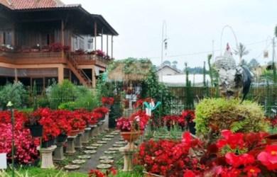Taman Begonia Glory