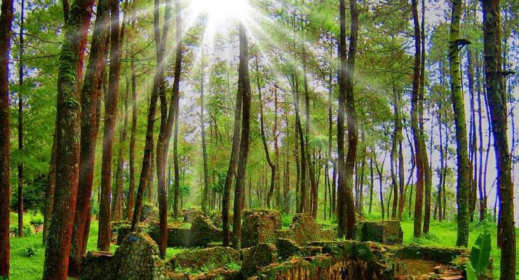 Pepohonan Disekitar Gunung Puntang