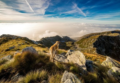 dog and mountain