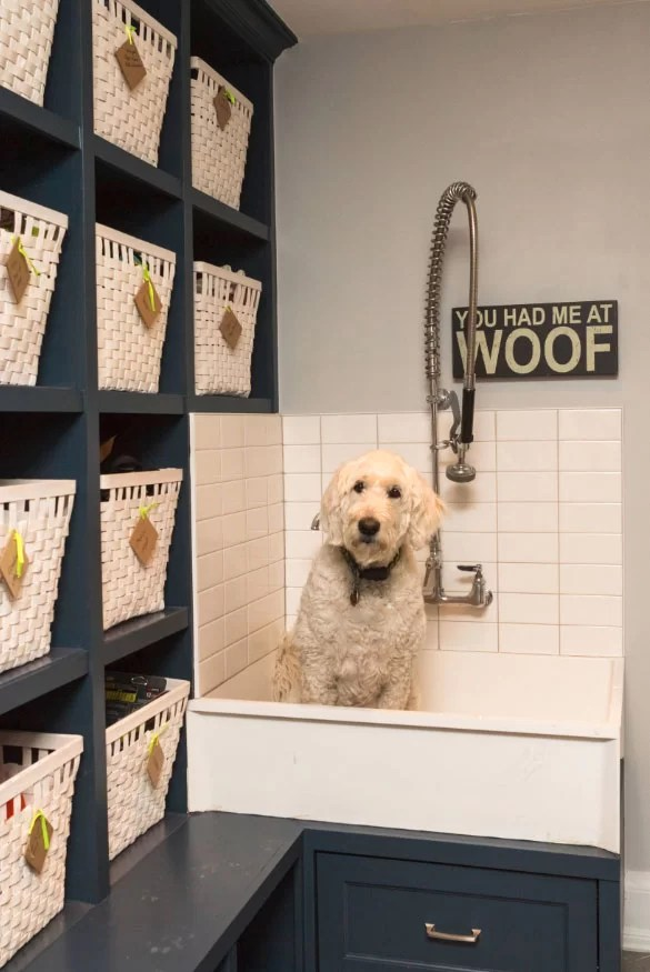 Outstanding Dog Shower Ideas Amp Pet Washing Stations Home