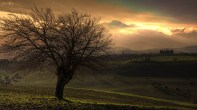 gallery33-awesome_lonely_trees-17