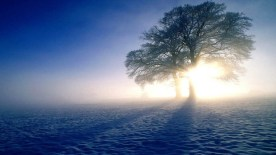 gallery33-awesome_lonely_trees-29