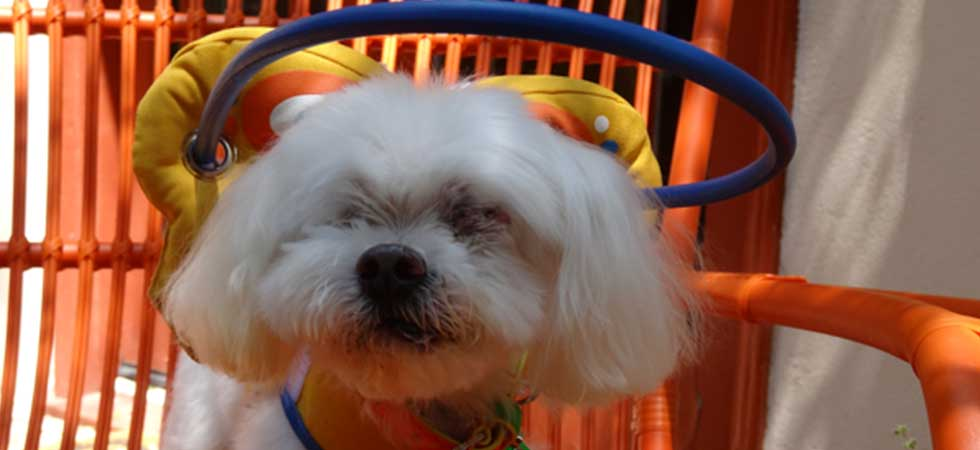 Blind dog non profit