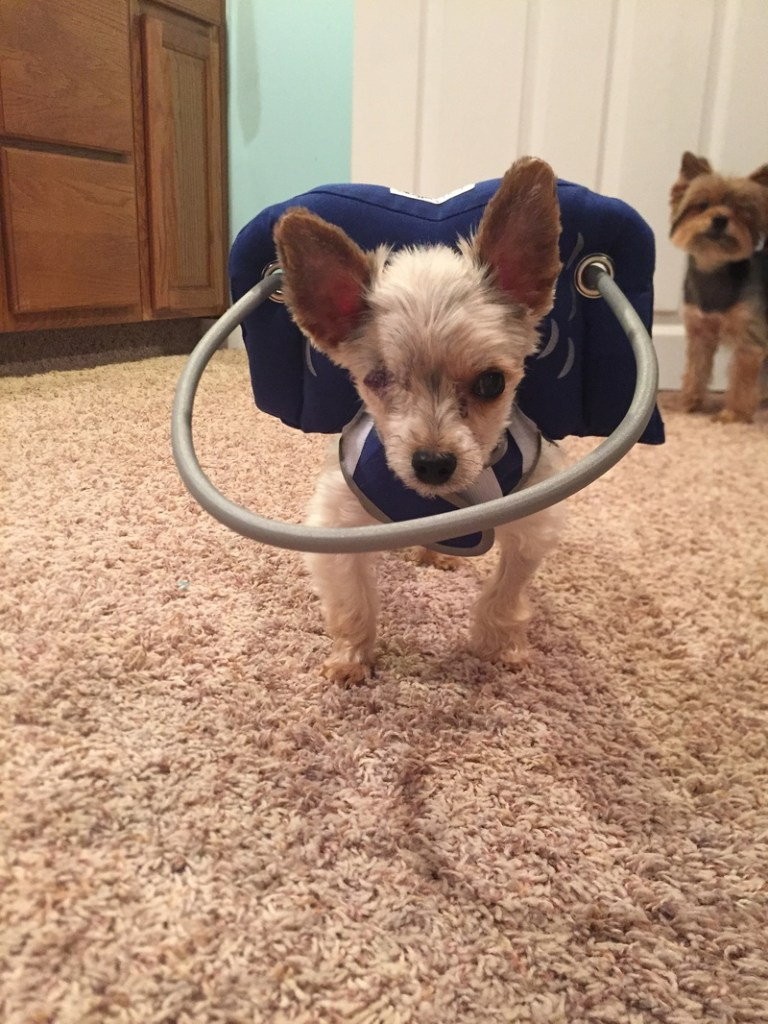 Jessi blind dog