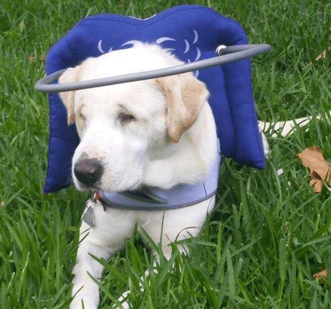 blinddogs1