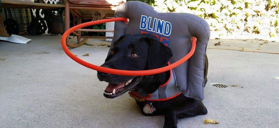 new-blind-dogs-slide