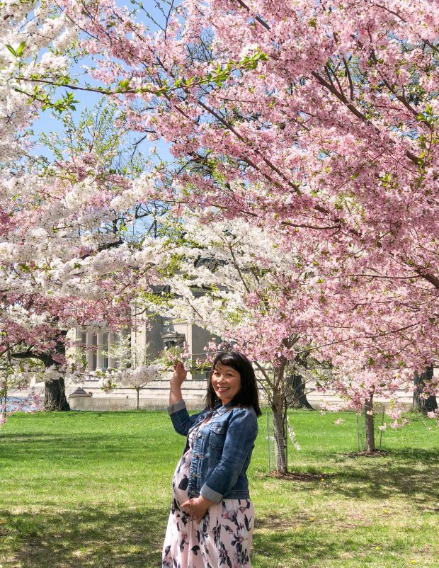 CherryBlossomsChicago14.jpg